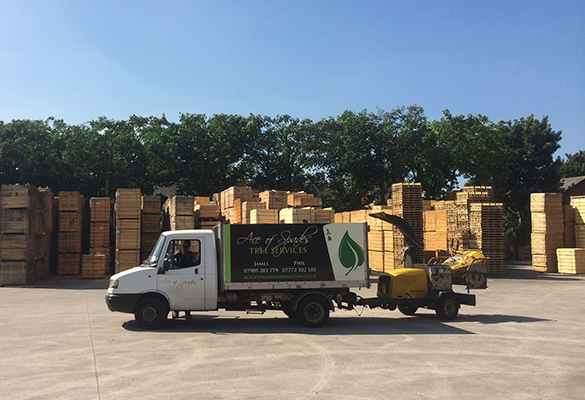 Ace of Spades Tree Services & Stump Removal