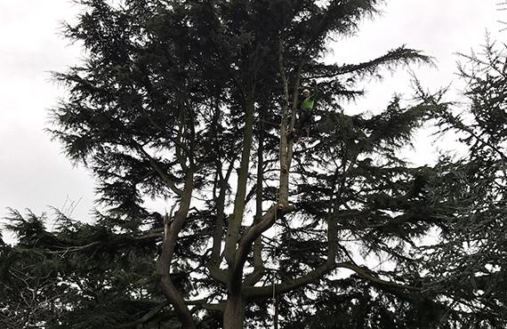 Emergency Tree Surgery